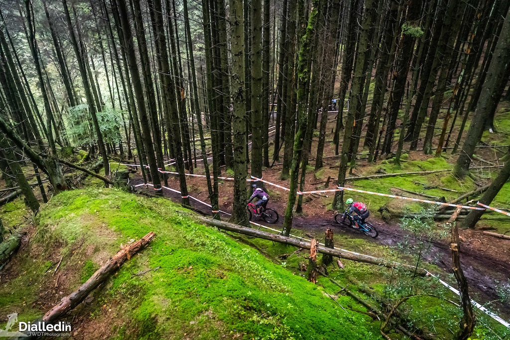 Grizedale R6
